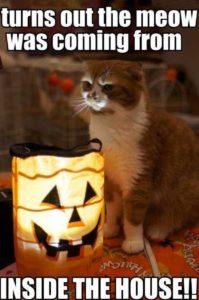 cat meow meme